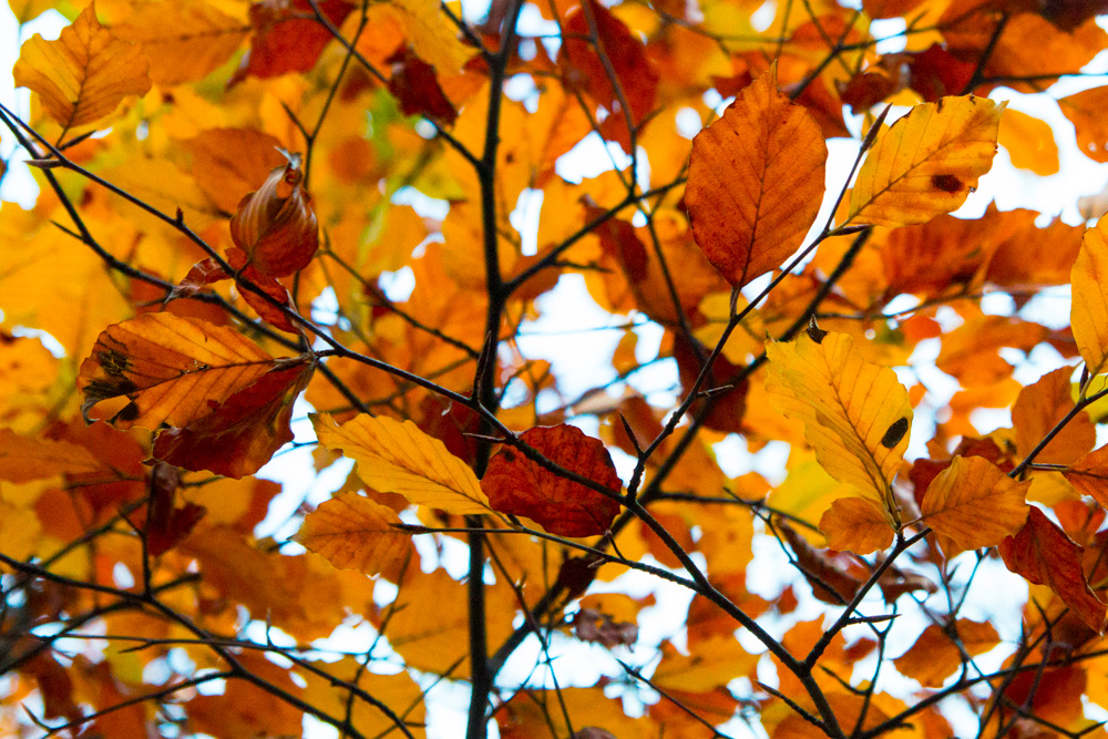 Autum Leaves (5)
