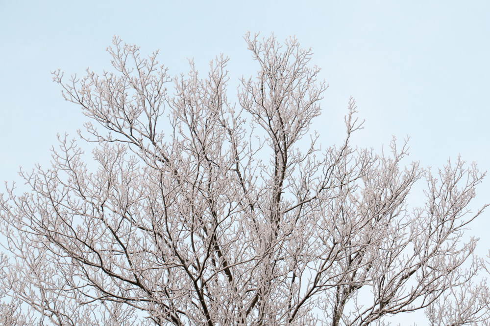 Frost (4)