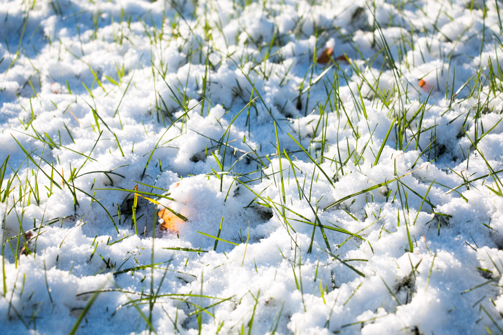 Snow and Grass