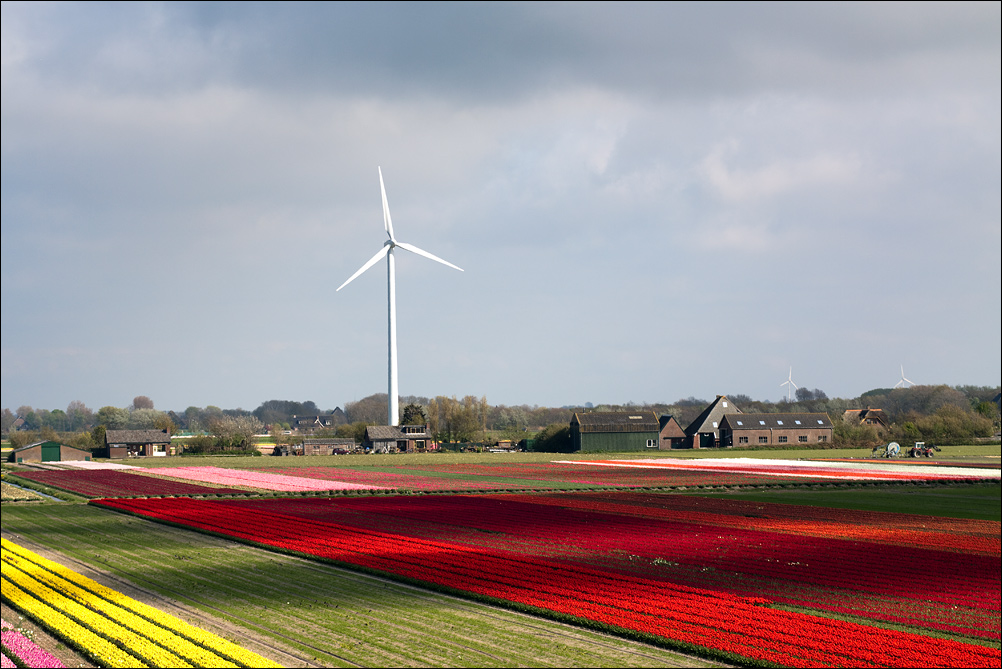 Tulip Fields (2)
